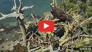 ospreycam maine